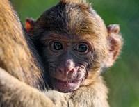 Wire Monkey Mommas