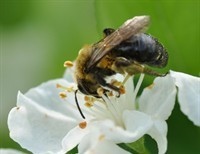 Revelation of the Busy Bee